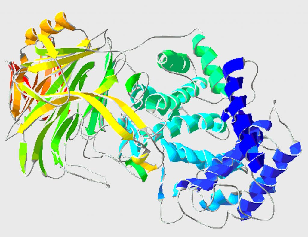 Fig. 1 Diagramma a nastro dell'enzima ialuronidasi